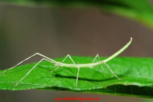 令人惊讶的昆虫伪装术