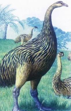 地球上30种灭绝珍稀动物